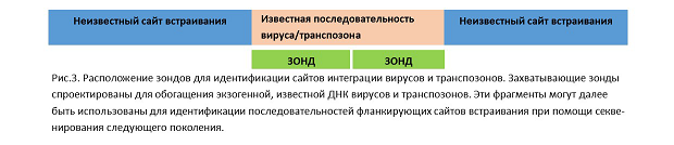 картинка: xGEN_fig3_molbiol.png