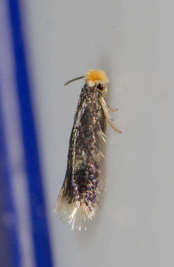 картинка: Insecta_00003.jpg