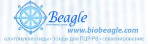 картинка: beagle.jpg