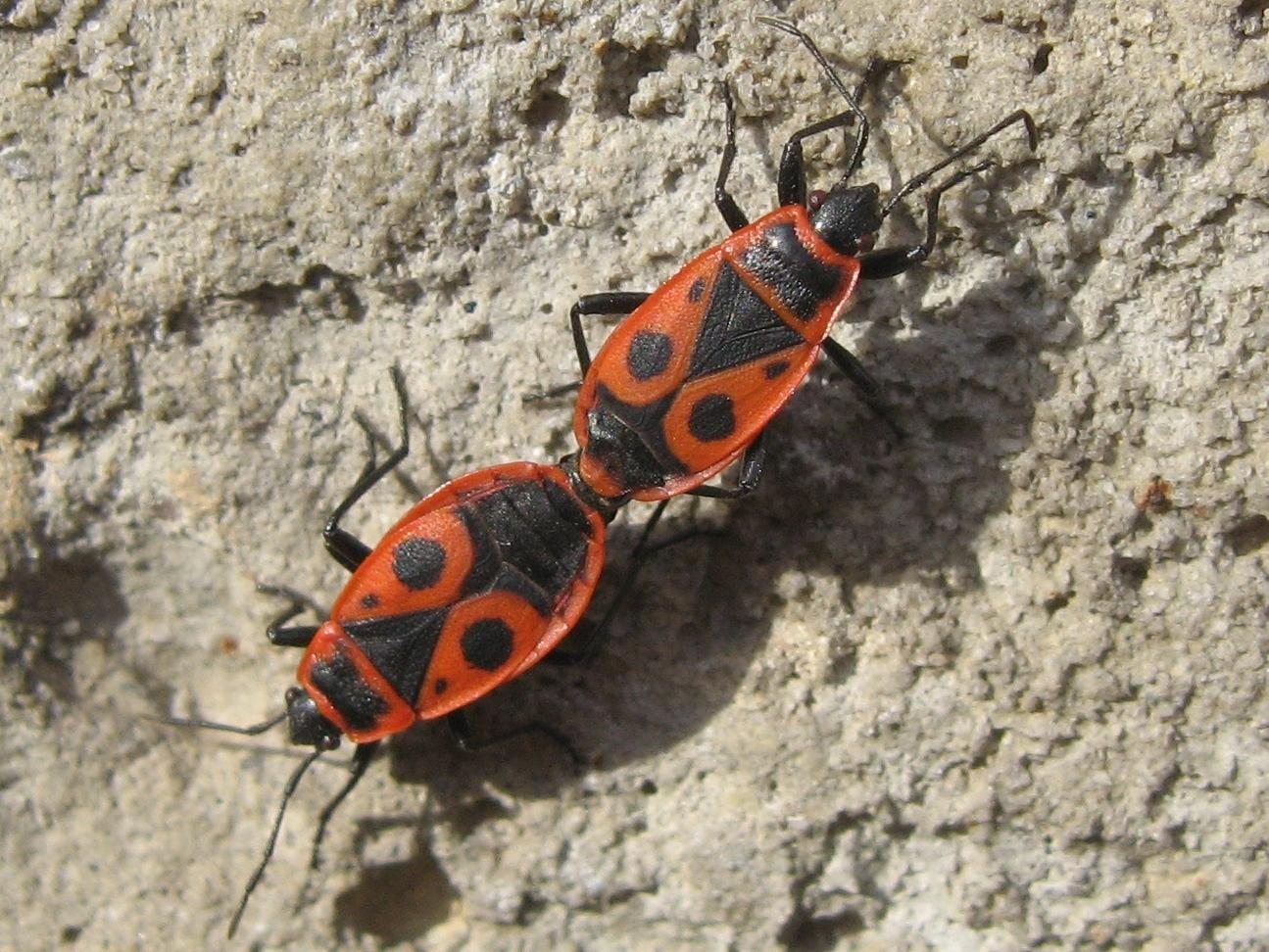 molbiol.ru -> Зимние насекомые: http://molbiol.ru/forums/index.php?showtopic=566369&st=50