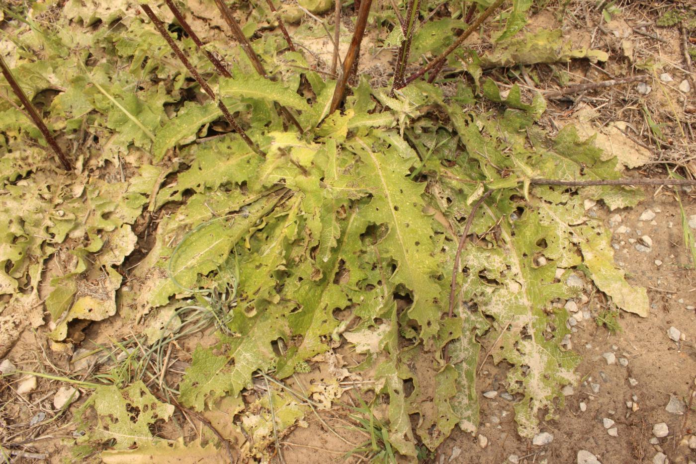 IMG_0495_plant_leaves.JPG - кликните, чтобы открыть увеличенную картинку