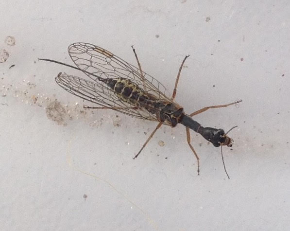 Attached ImageINSECT_2.jpg
