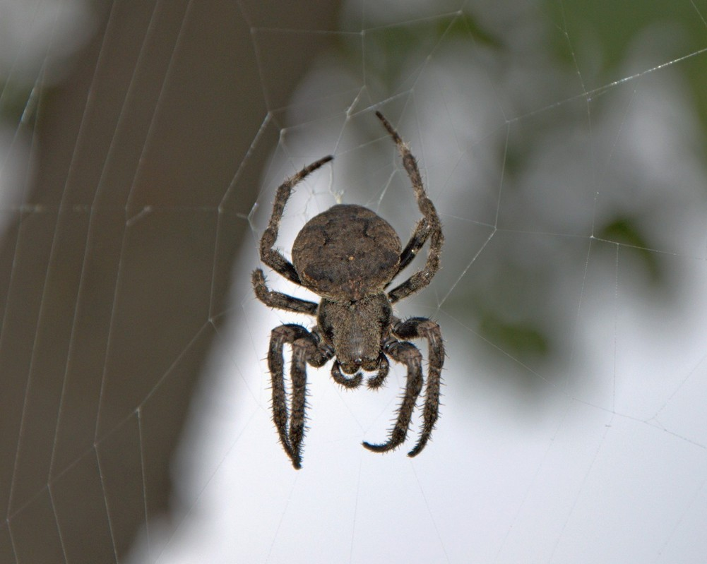 картинка: spider_DSC_0797.jpg