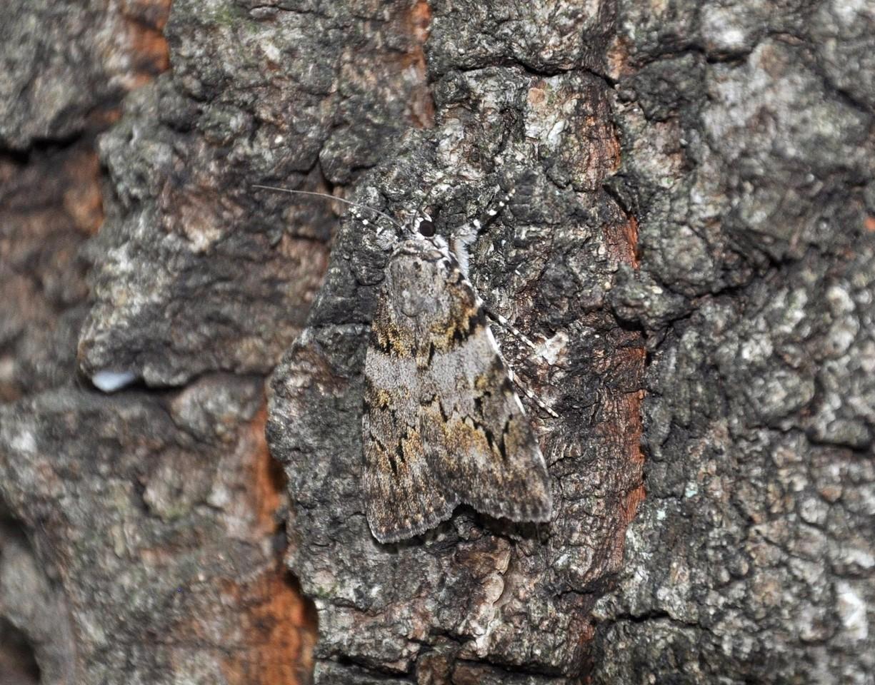 картинка: moth_DSC_0471.jpg