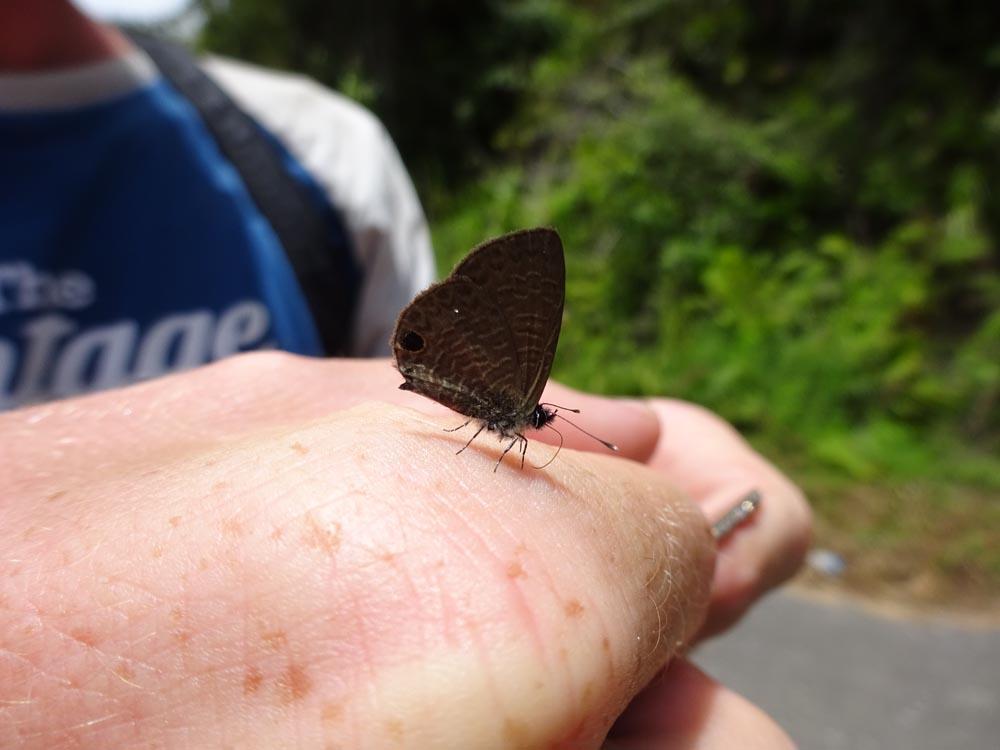 картинка: Lycaenidae2.jpg