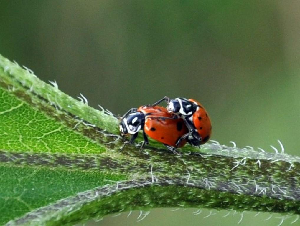 картинка: ladybird.jpg