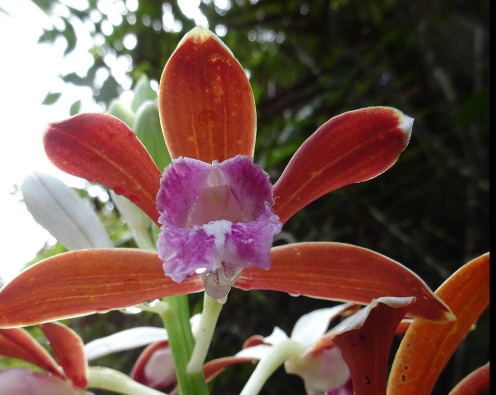 картинка: orchidea8.jpg