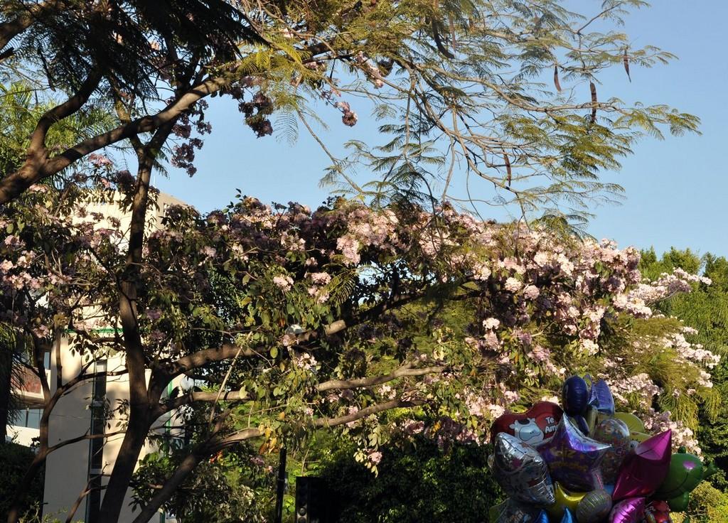 картинка: cuernavaca25.jpg