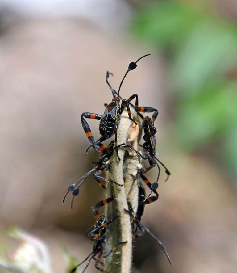 картинка: bugs7.jpg