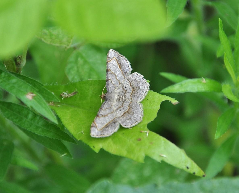картинка: moth_DSC_0182.jpg