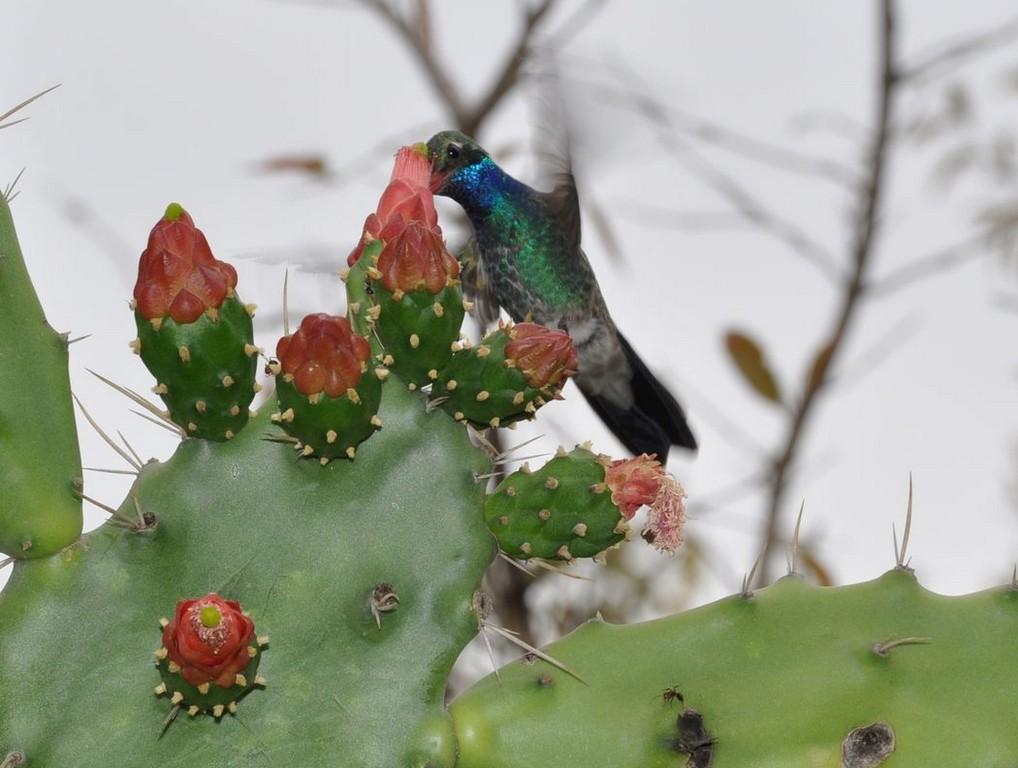 картинка: colibri2.jpg