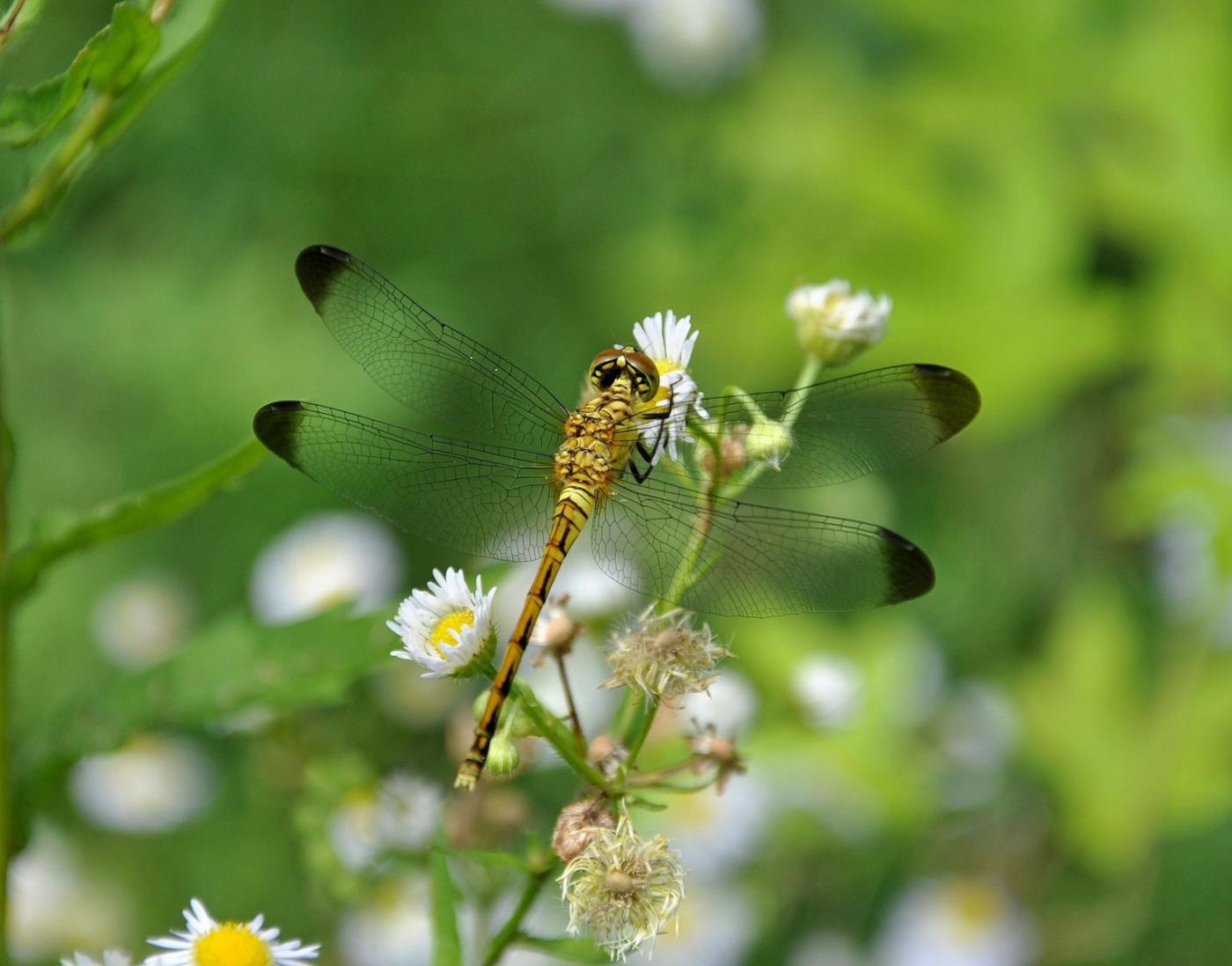 Odonata2_DSC_0235.jpg - кликните, чтобы открыть увеличенную картинку