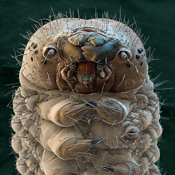 картинка: microscopytools.jpg