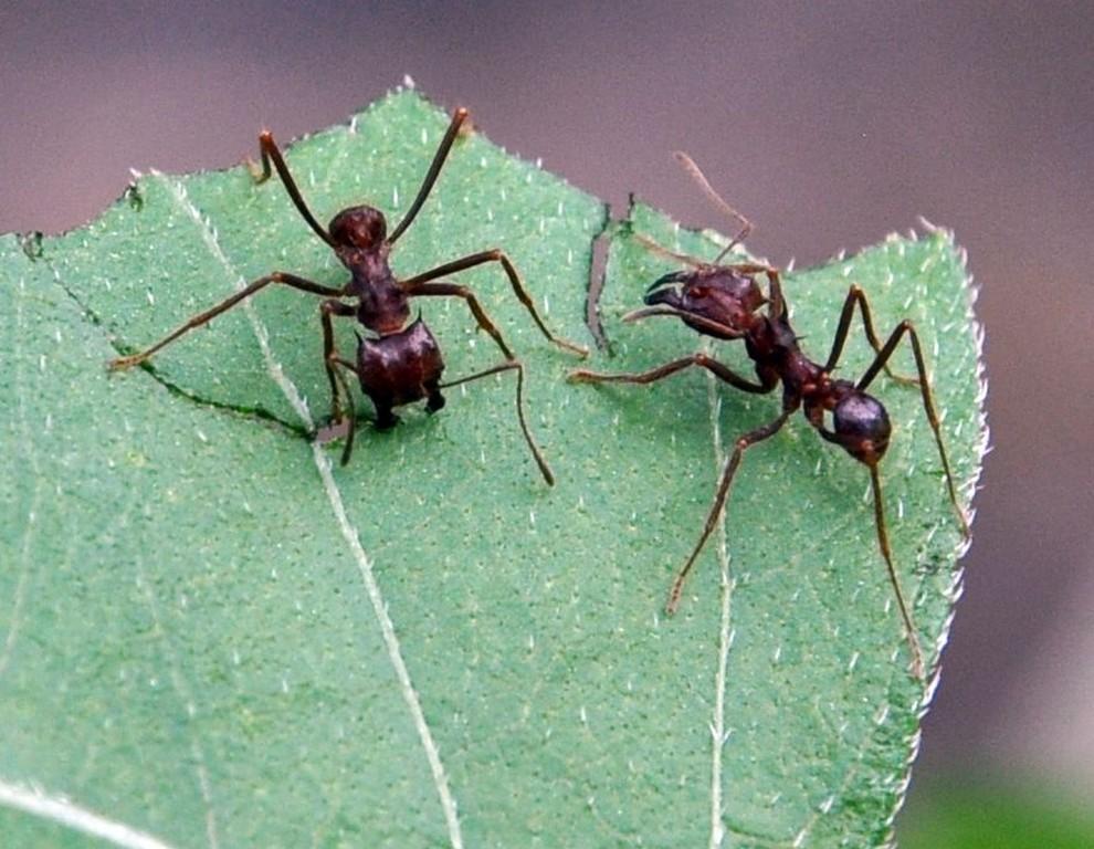 картинка: ants4.jpg