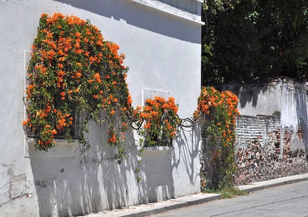 картинка: cuernavaca72.jpg