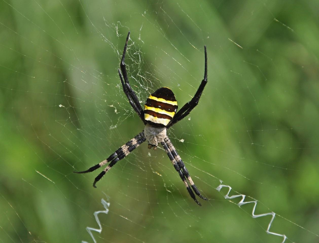 картинка: spider_DSC_0115.jpg