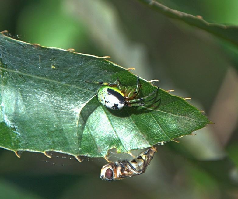 картинка: spider_DSC_0546.jpg