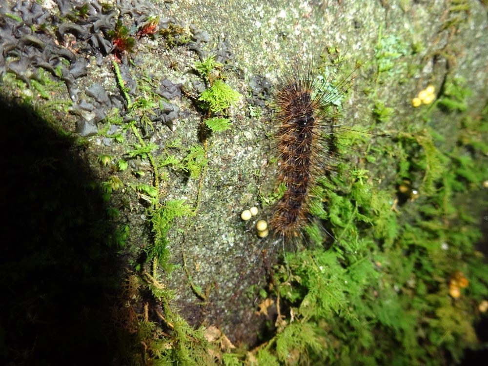 картинка: Larva2.jpg