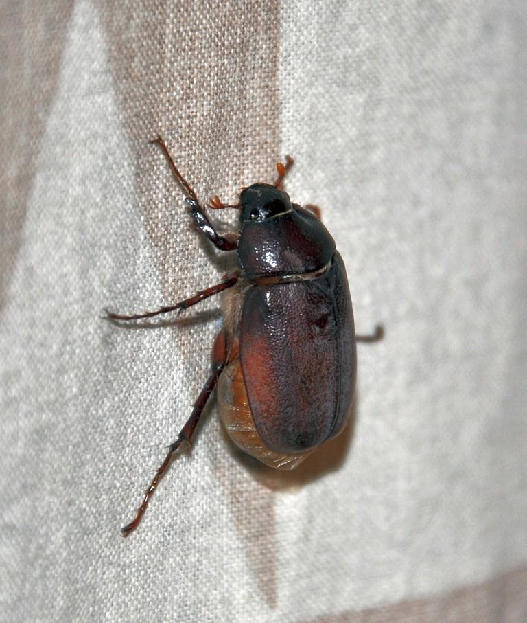 картинка: Beetle_DSC_0682.JPG