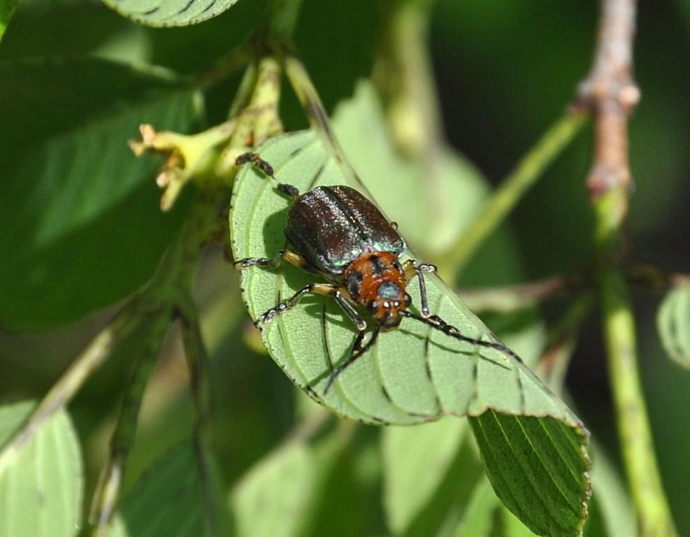 картинка: beetle_DSC_1482.JPG