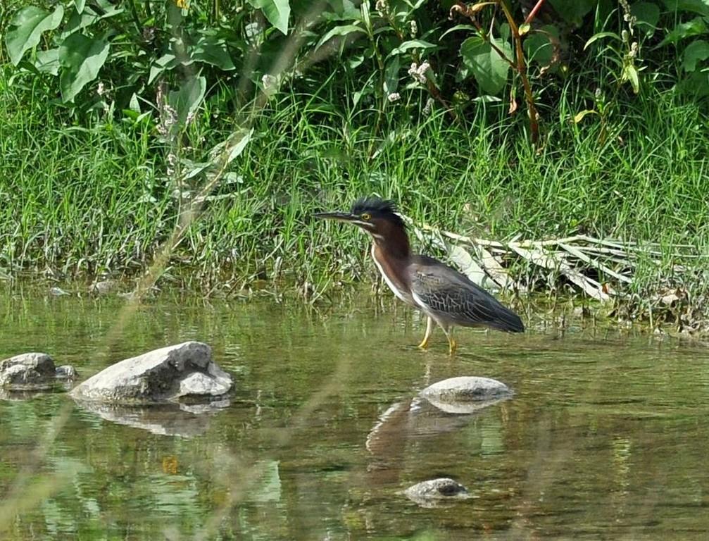 картинка: bird5.jpg