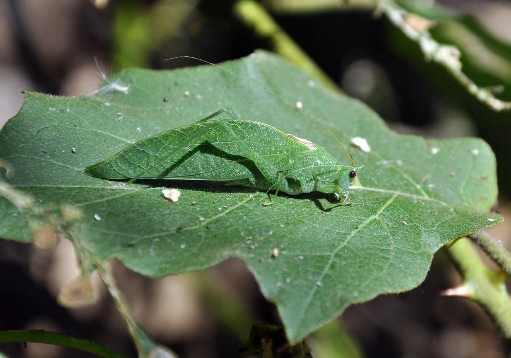 картинка: grasshopper.jpg