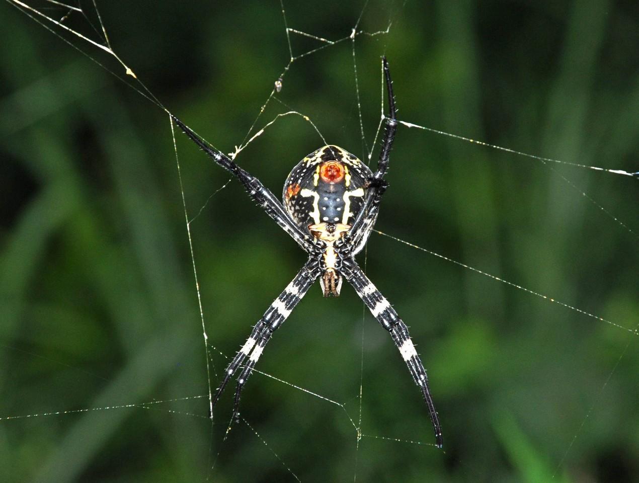 картинка: spider_DSC_0879.jpg