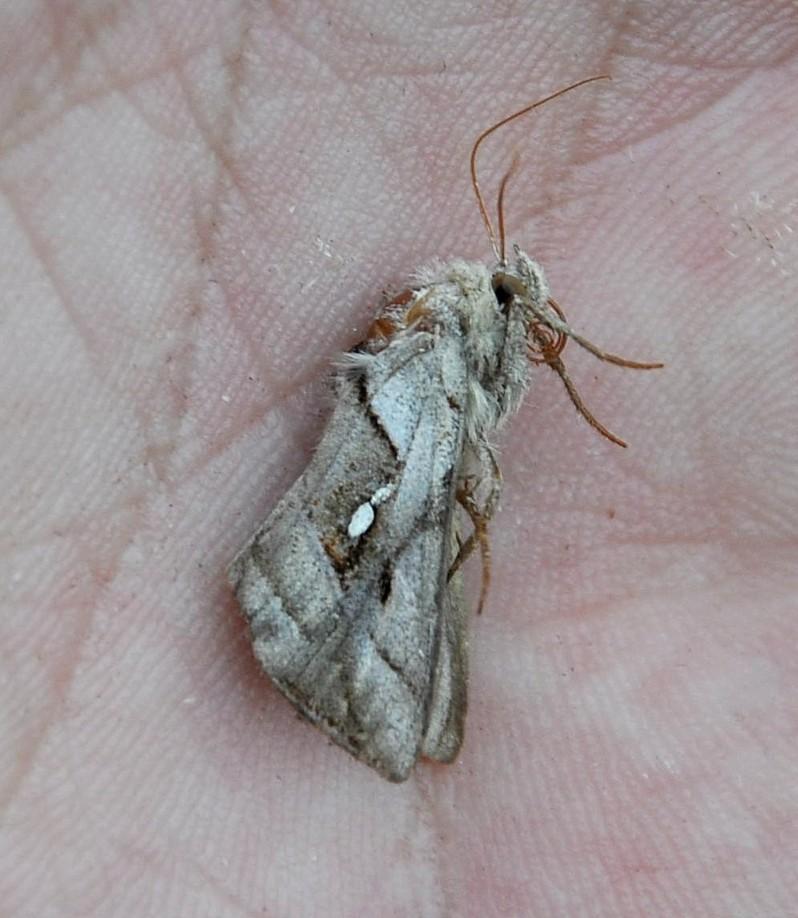картинка: moth_DSC_0300.jpg
