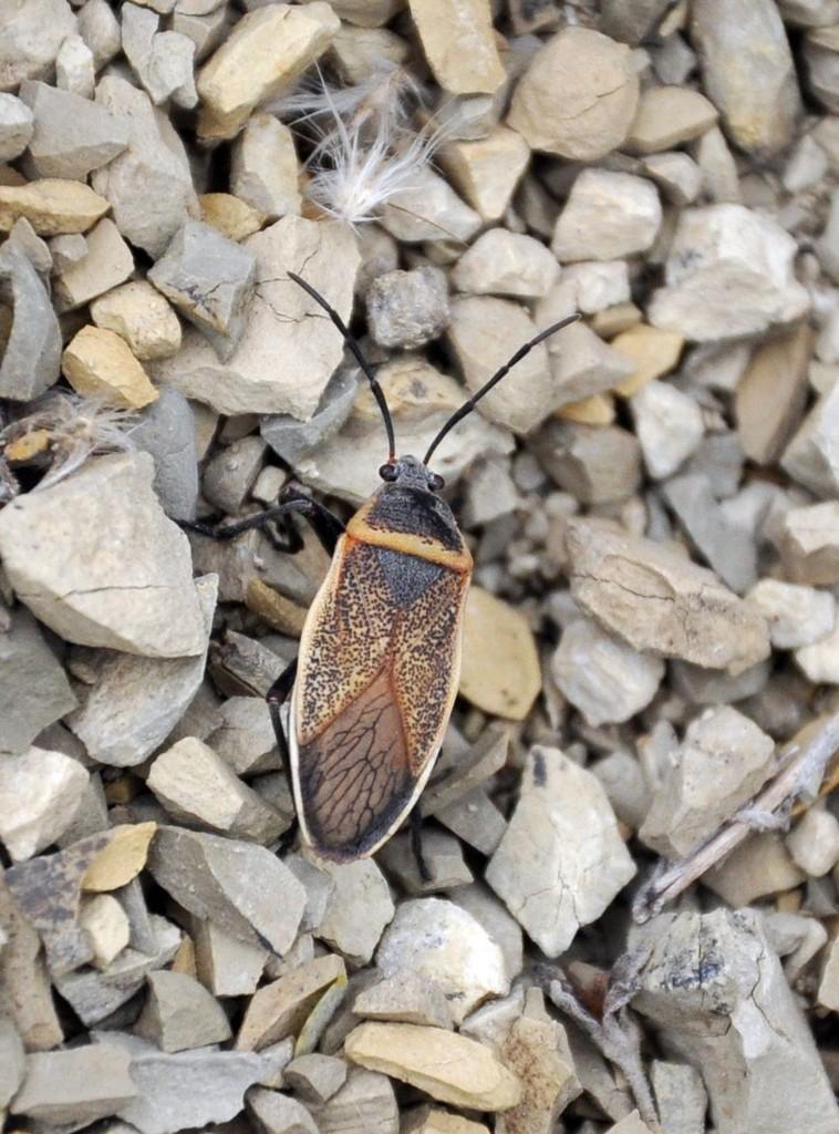картинка: bug14.jpg