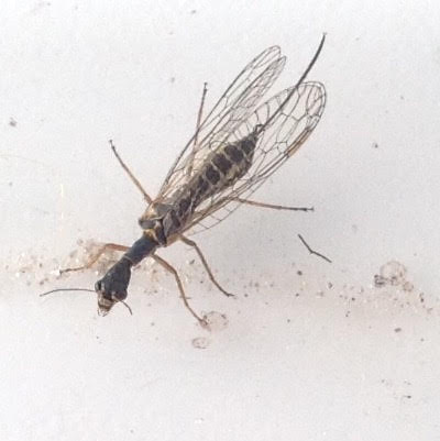 Attached ImageINSECT_3.jpg