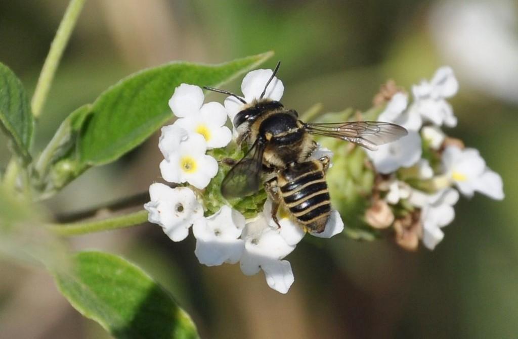 картинка: bee.jpg