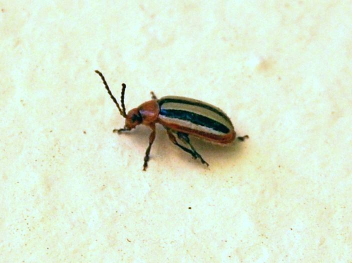 картинка: beetle4.jpg