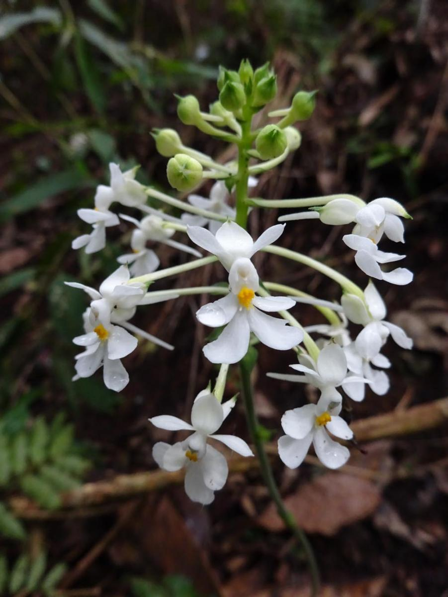Orchidea6.jpg - кликните, чтобы открыть увеличенную картинку