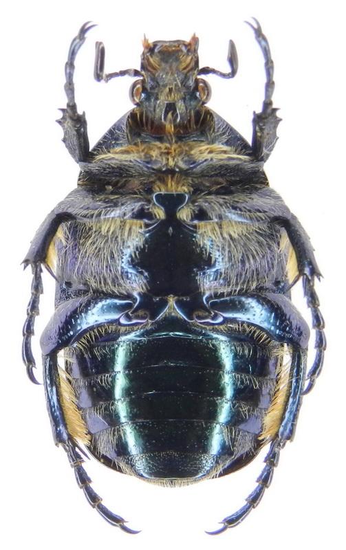 картинка: ssp.tyrrenica___17.VI.2008__France__Corse___San_Nicolao_env.__02_.jpg
