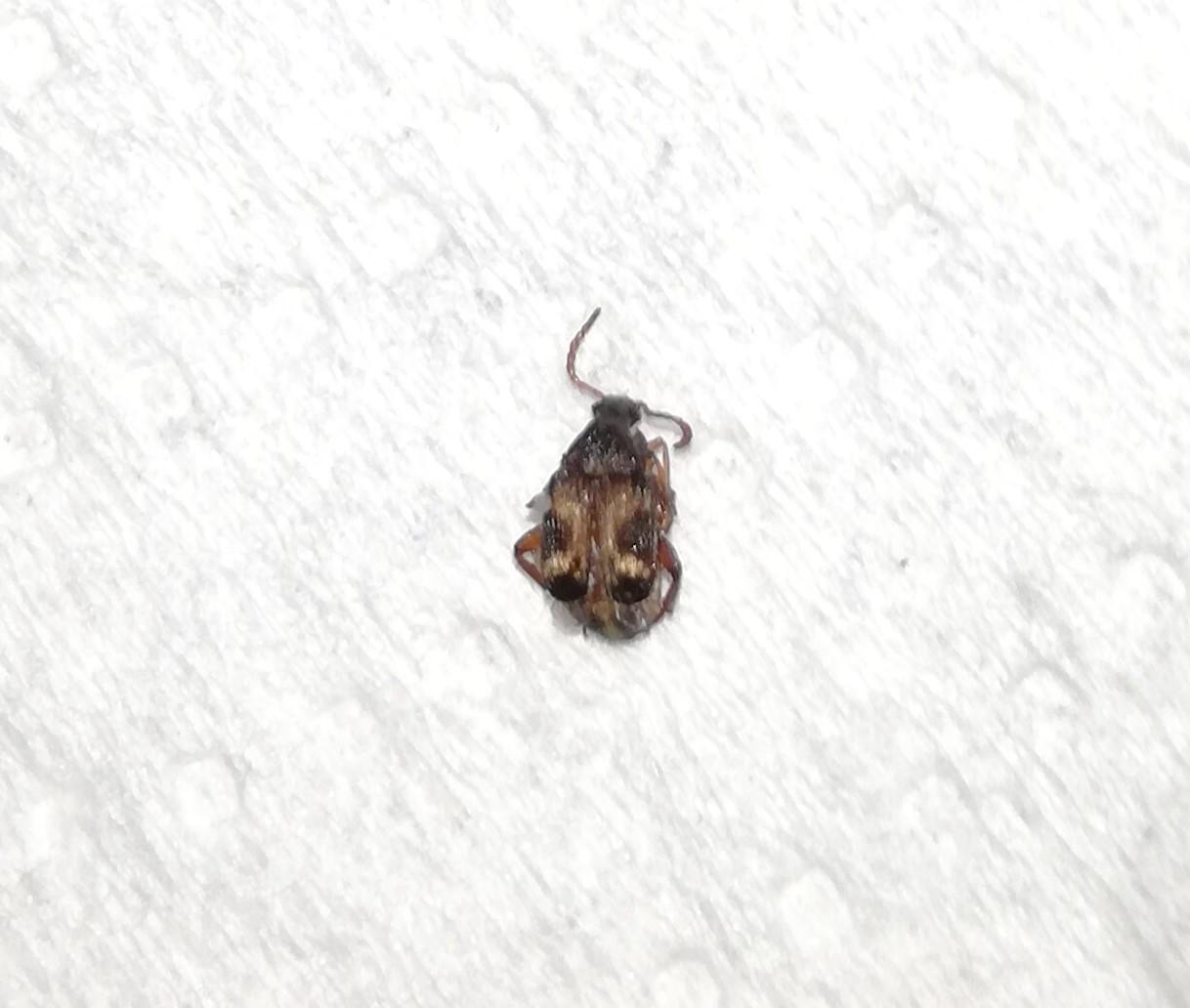 картинка: Insecto__3_.jpg