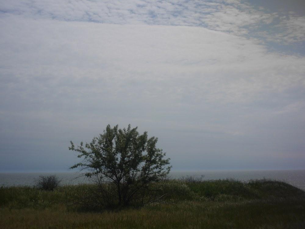 картинка: P1480356.jpg