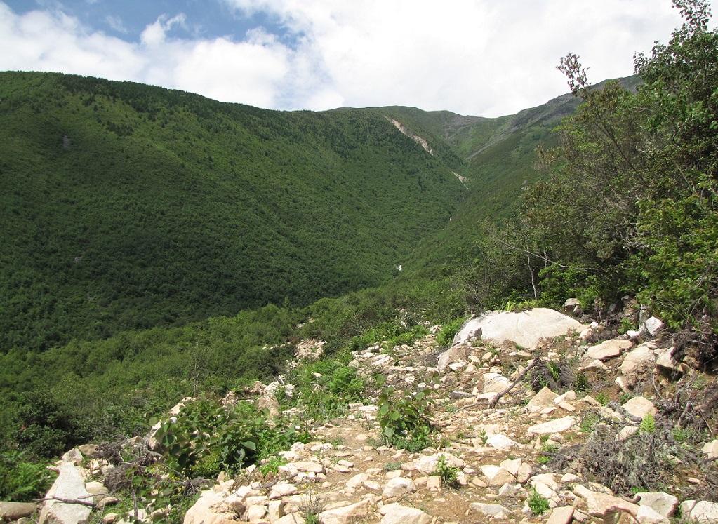 картинка: IMG_8487Clostera_anastomosis_habitat.JPG