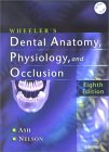 картинка: Wheeler_s_Dental_Anatomy_Physiology_and_Occlusion.jpg