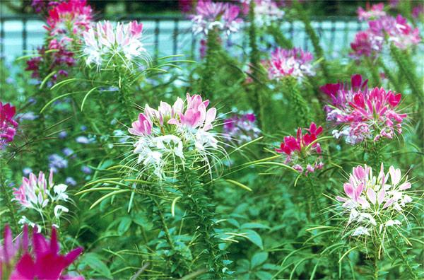 Высокие цветы комнатное растение с