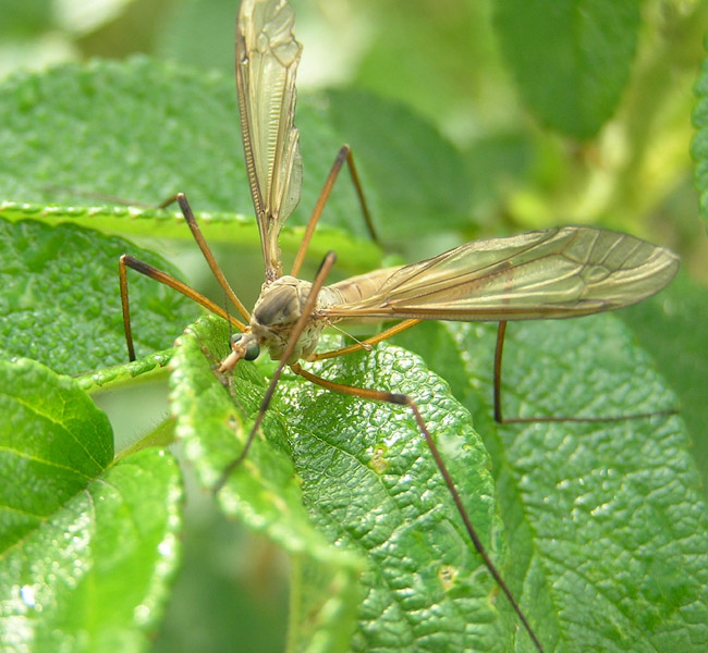 """...обычно называют  """"малярийными комарами """" и стараются уничтожить."""